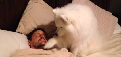 Le chien veille sur son maître qui dort, mais sa façon de le réveiller est adorable.