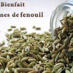 Graines de fenouil bienfaits réels et effets secondaires