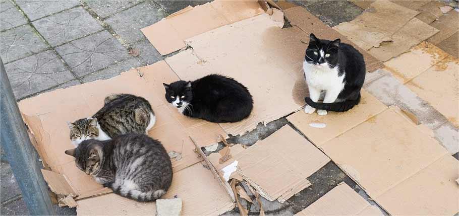 Chats errants – Que faire s'ils vivent près de chez vous ?