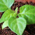 10 recettes pour fabriquer votre propre engrais naturel à la maison