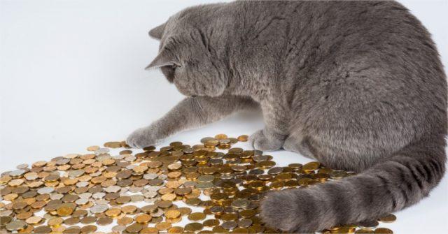 prendre soin de chat égale dépenser de la monnaie