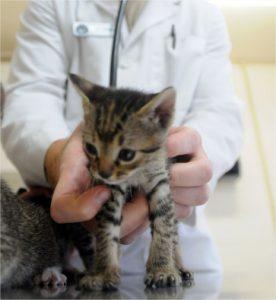 chat malade = voir le vétérinaire