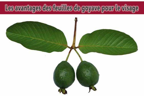 Les avantages des feuilles de goyave pour le visage